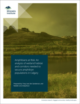Urban Wetland Connectivity